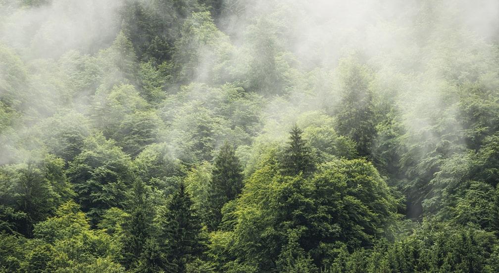 Хмарний ліс