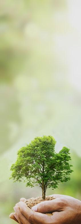 дерево в руці